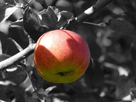 apple-273839_1280